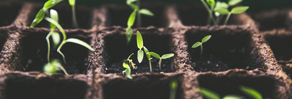 Seed Starting: Give Your Garden a Head Start | Tuesday, February 4 at 7:00 p.m.